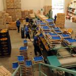 azienda agricola santamaria tursi (11)