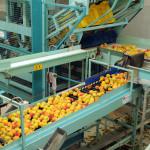 azienda agricola santamaria tursi (16)