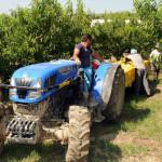 azienda agricola santamaria tursi (18)