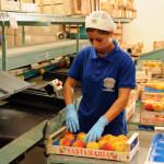 azienda agricola santamaria tursi (2)