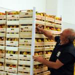 azienda agricola santamaria tursi (4)