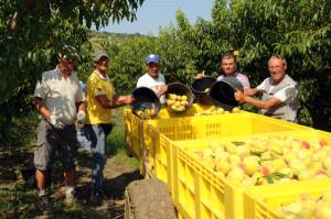 azienda agricola santamaria tursi (5)