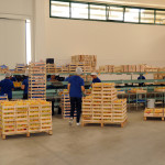 azienda agricola santamaria tursi (9)